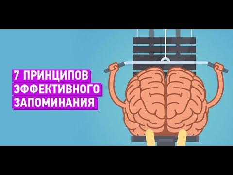 Формула хорошей памяти или 7 принципов эффективного запоминания