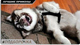 ПОДБОРОЧКА, смешные видео про животных бесплатно #4