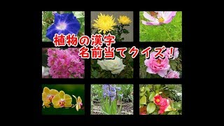植物の漢字(花・草・樹木など) 名前当てクイズ 銀杏、桔梗、蒲公英、...