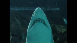 Sharks at the Tennessee Aquarium - Up Close