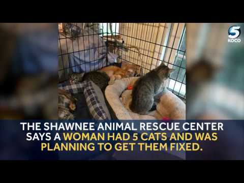 KOCO Digital Originals: 39 Cats Rescued from Seminole Home