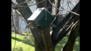Squirrel Proof Rollerfeeder Bird Feeder.avi