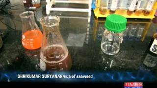 The Power of Shunya : Seaweed as a biomass source for biofuel