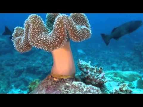 The New Caledonia Reef