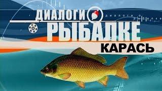 Диалоги о рыбалке - Ужение карася