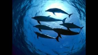 Deep Dive Corp. - Deep Dive
