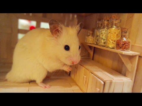 Tiny Hamster in his Tiny Kitchen