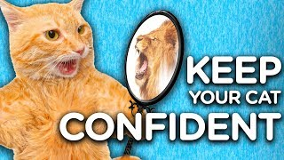 3 Steps to Having a Confident Cat with Jackson Galaxy