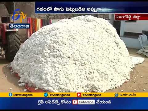 Drastic Price Drop   Looting of Middleman   Hurting Cotton Farmers   Sangareddy
