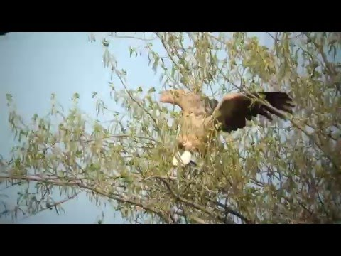 Vroege Vogels - Vale gier versus zwarte kraaien