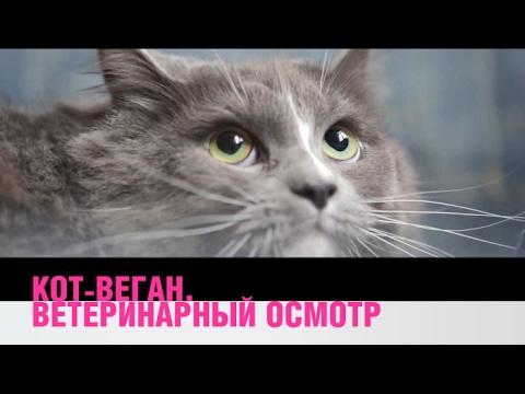 Вопрос: Могут ли кошки или собаки сидеть на вегетарианской диете, почему?