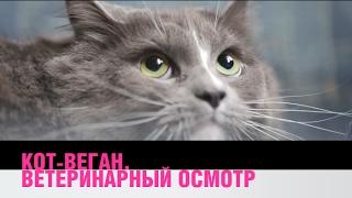 Насколько здоров кот веган?