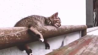 śmieszne zwierzęta, śmieszne koty, śmieszne psy ,śmieszne filmiki