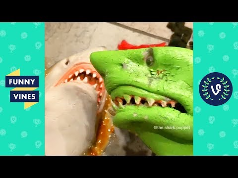 TRY NOT TO LAUGH – Funny Shark Puppet Instagram Videos!