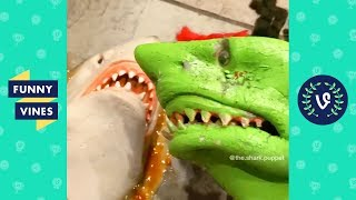 Download TRY NOT TO LAUGH - Funny Shark Puppet Instagram Videos! MP3 and video free