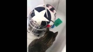 Кошка моет шлем ))