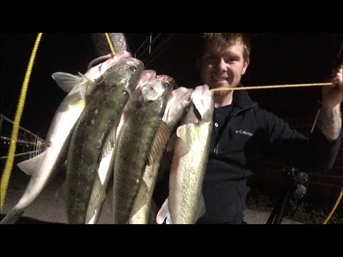 Walleye Fishing The Easiest Rig Ever! Best Shore Setup To Catch Big River Walleye!