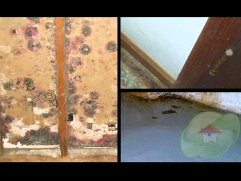 water-and-mold
