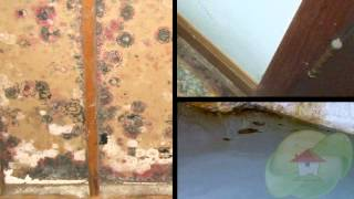 Water and Mold