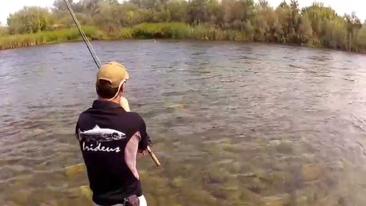 Steelhead fly fishing flies in action with irideus spey for Steelhead fishing california