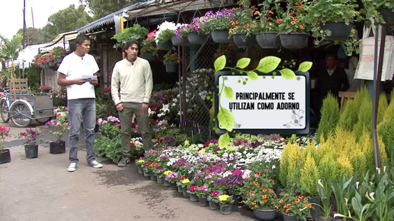 Mercado Madre Selva Xochimilco Mexico Youtube