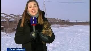 В России приняли закон о защите животных