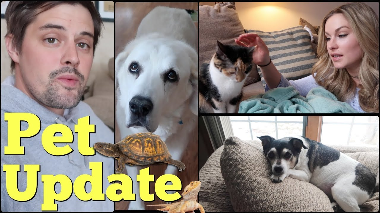 UPDATE ON OUR SENIOR PETS. Our Mini Zoo. - Pranksters in Love Vlog
