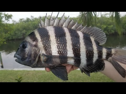 Sheepshead Catch & Cook - 4 Day Multispecies Saltwater Bank Fishing