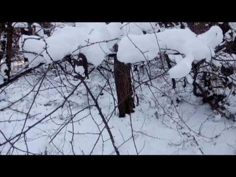 Фото картинки снежные под музыку Чайковского 12 dec 2016 chaik photo