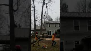 Rigging a large tree limb next to a house safely