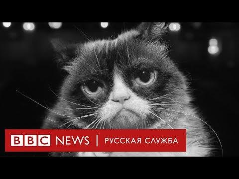 Памяти Грэмпи Кэт