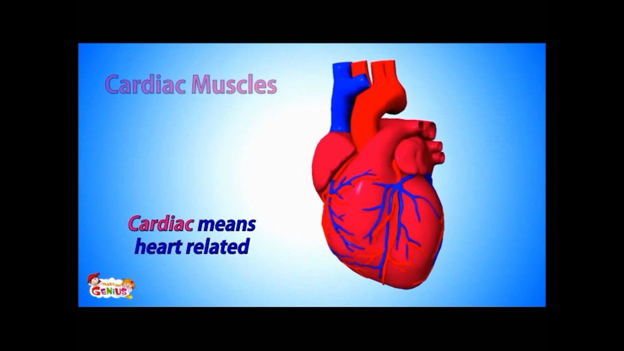 types of muscles in human body - youtube, Muscles