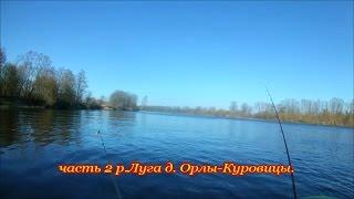 Рыбалка на р.Луга д.Орлы-Куровицы.Ч-2.