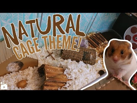 GIVING BASIL A NATURAL CAGE | Hamster cage tour
