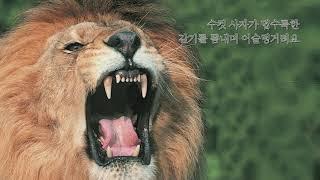 [004](애니메이션) 명품꼬마 자연관찰_동물의제왕 호…
