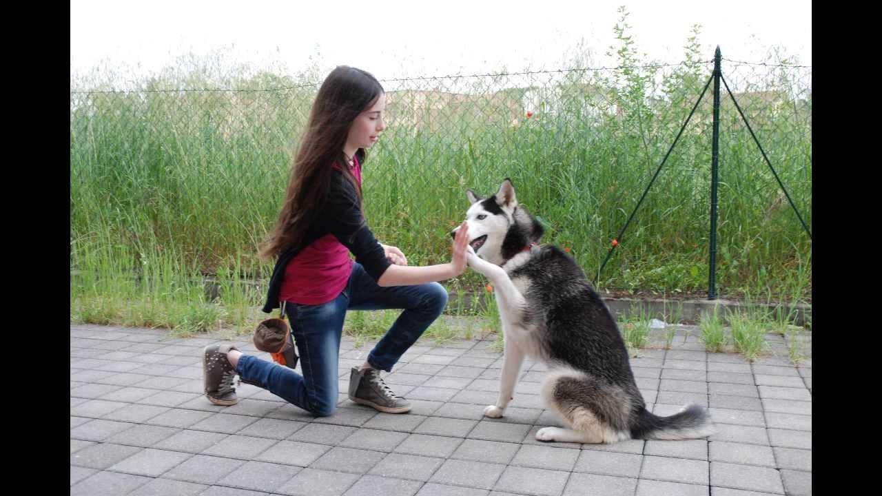 Animalia modena vendita articoli e alimenti per animali for Articoli per cani