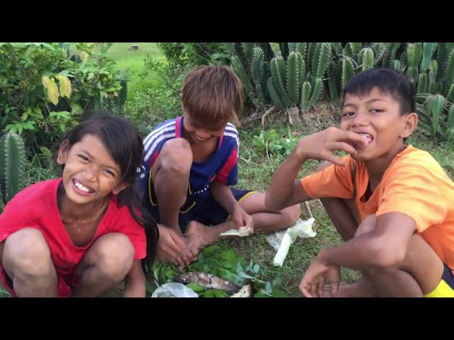 Amazing Children Fishing - How to Catch Fish by Hand in Rice Field