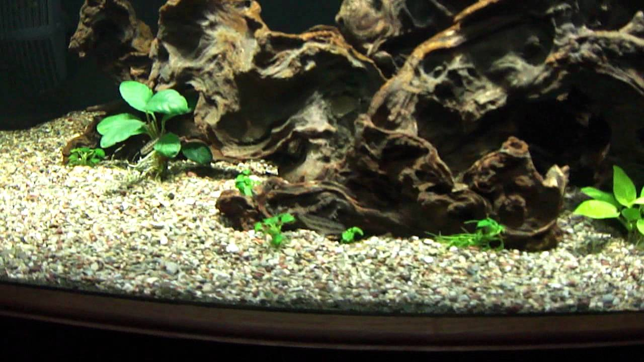 125 Gallon Freshwater Aquarium Youtube
