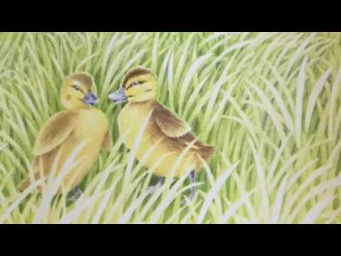 Two Little Ducks Get Lost