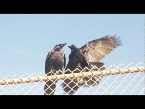 Talking Animals: Birds on the fence and on the beach