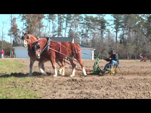 NC Work Horse and Mule Association Plow Day, Newton Grove, N.C.