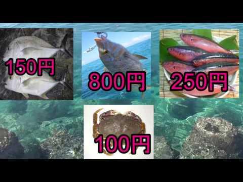 【予告】釣り生活 所持金0円で即終了【沖縄】