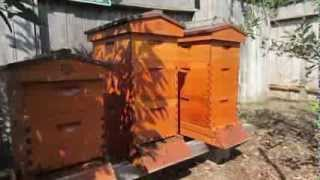 Beekeeping: Preparing Hives for Cold Weather