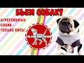 Дрессировка собак 18+    кинолог издевается над собакой