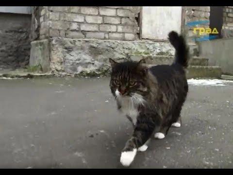 Телерадиокомпания Град: Одессе нужно больше приютов для бездомных животных
