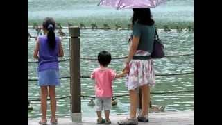 宜蘭梅花湖+花鹿米民宿