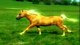 Ivory Pal Music Video