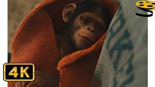 Уилл Родман приносит Маленького Цезаря Домой | Восстание планеты обезьян (2011) HD
