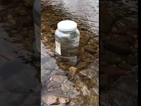 Bingham Memorial School trout release