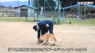 嘱託警察犬と触れ合う学習会